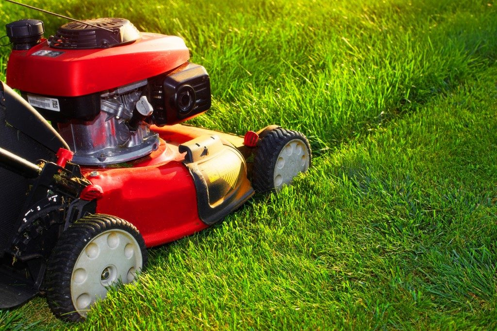 red lawn mower on the grass