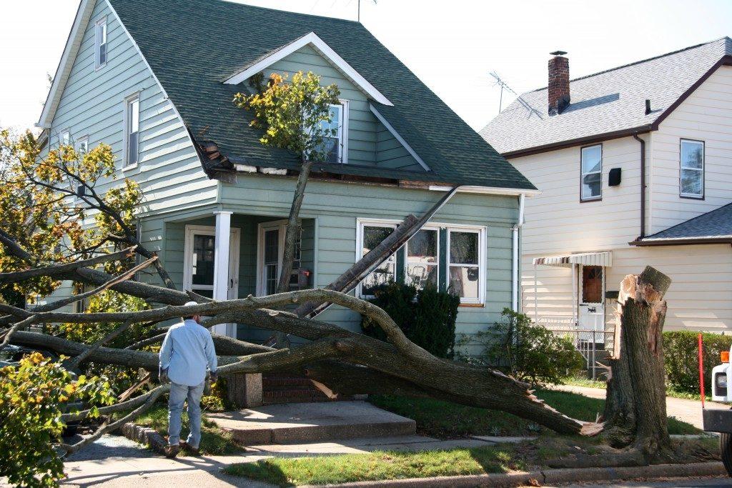 fallen tree infront of home