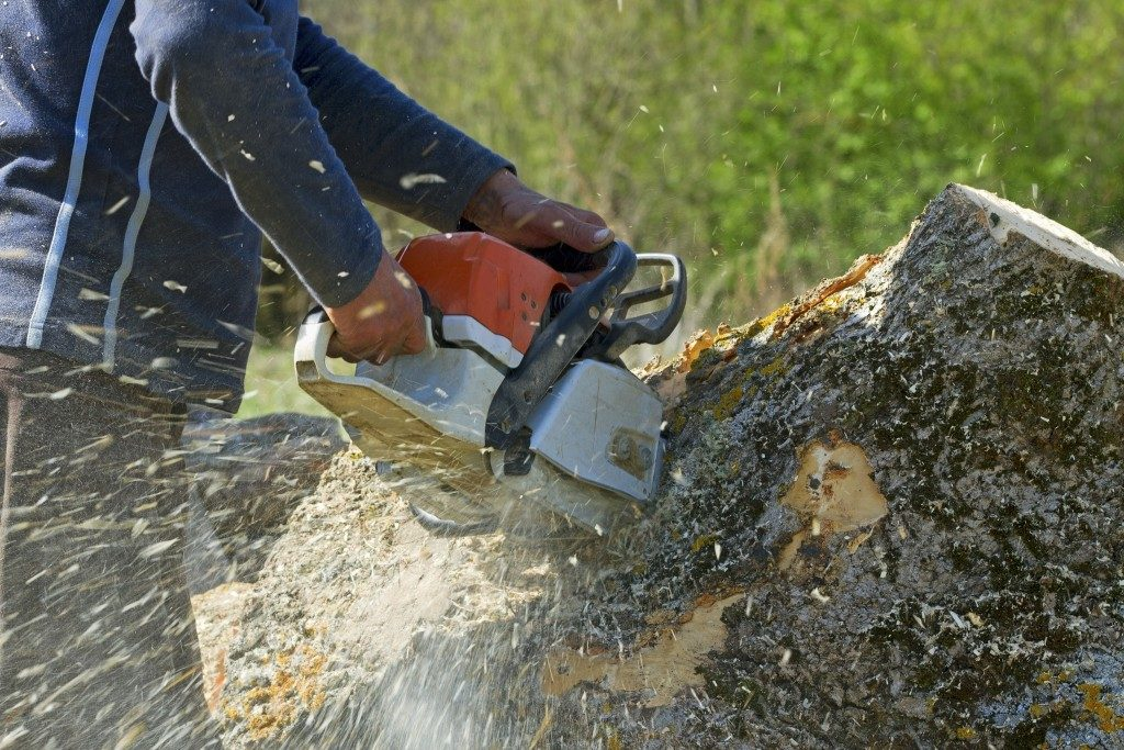 Man cuts a tree stump