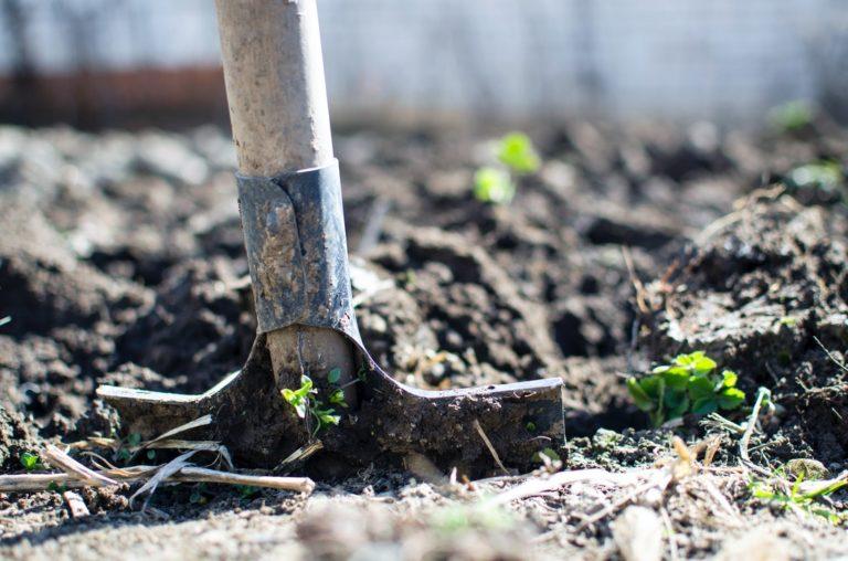 shovel for backyard garden