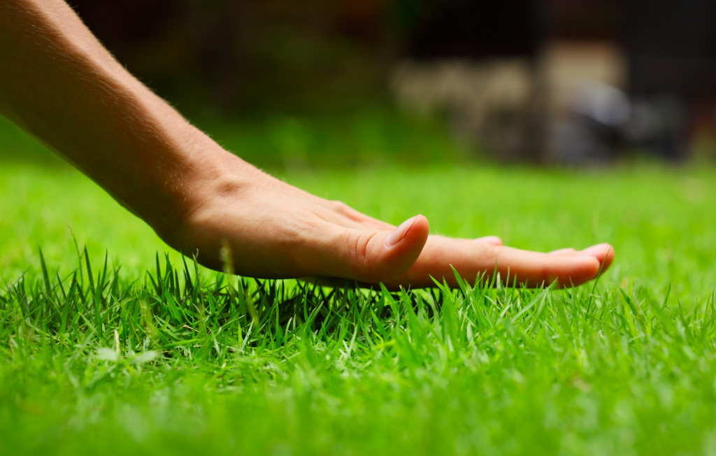 person's hand on top of grass lawn